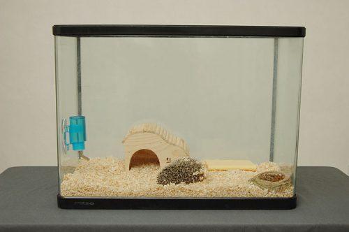 ハリネズミ水槽