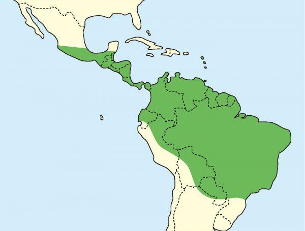 グリーンイグアナ分布図