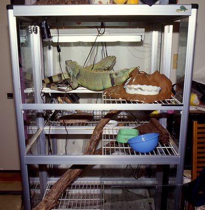 イグアナ温室
