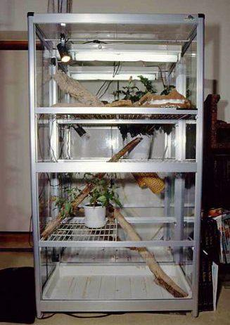 イグアナの温室