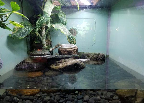 水ガメの飼育