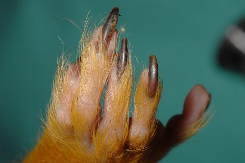 リスザル爪
