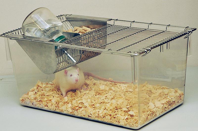 実験動物用ケージラット