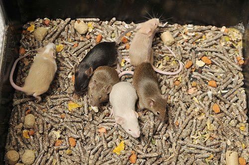 カラーマウス