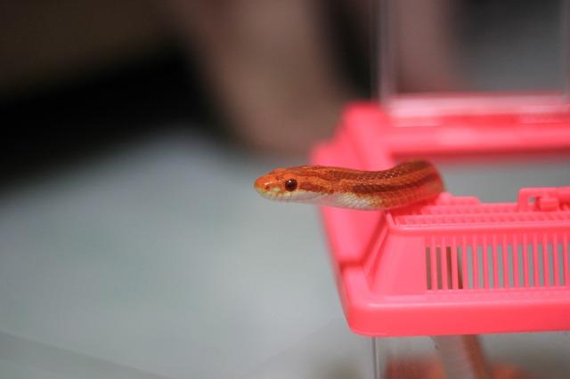 ヘビの脱走