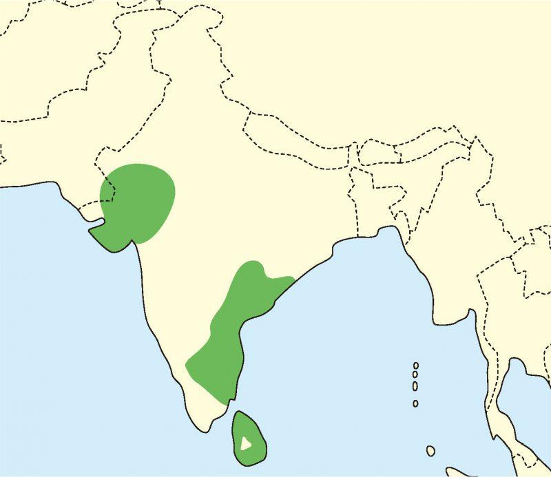 インドホシガメの分布地図
