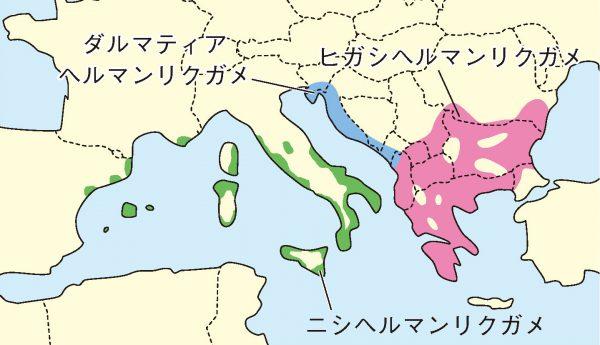 ヘルマンリクガメ分布図