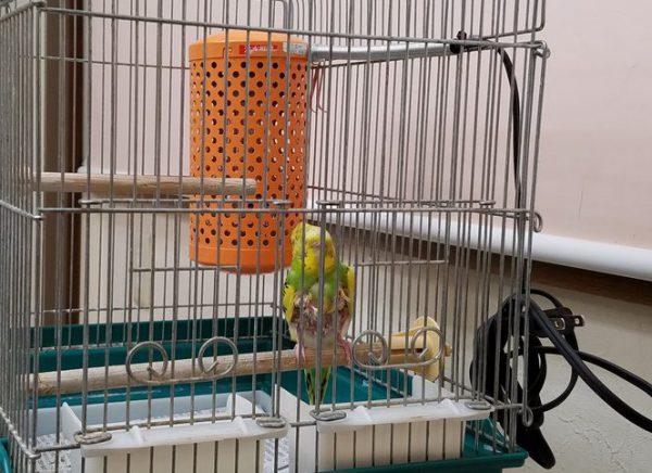 小鳥の保温