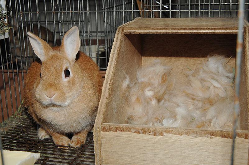 ウサギ巣箱