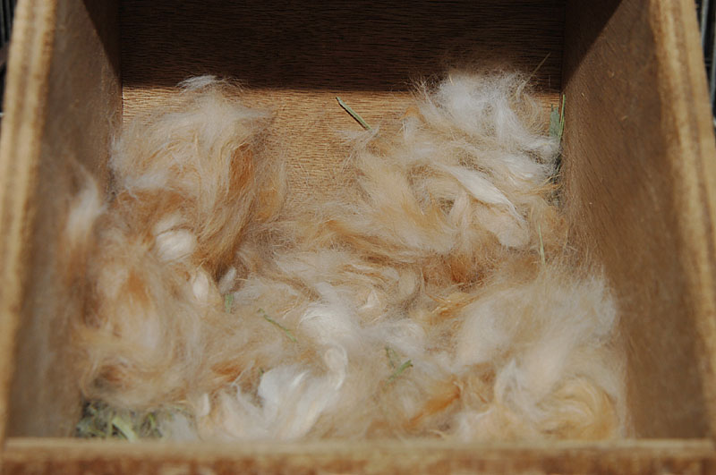 ウサギ営巣