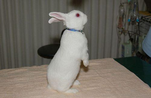 ウサギ探索