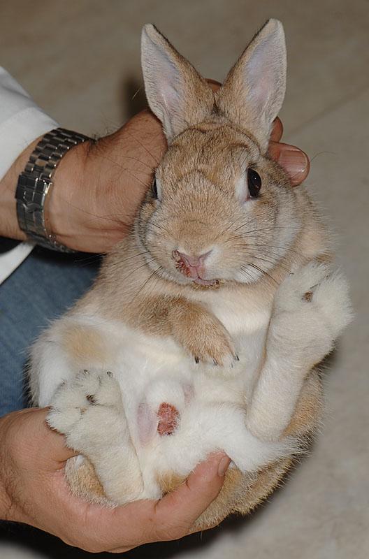 ウサギの画像 p1_23