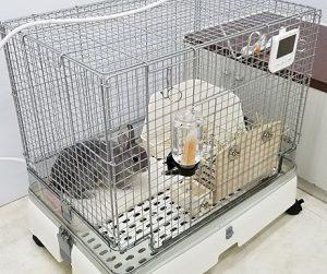 ウサギのケージ