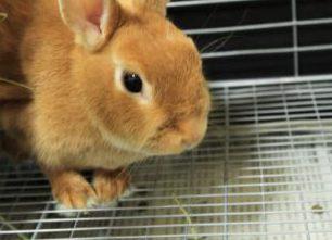 ウサギ金網スノコ