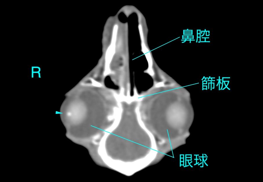 ウサギ鼻炎CT写真