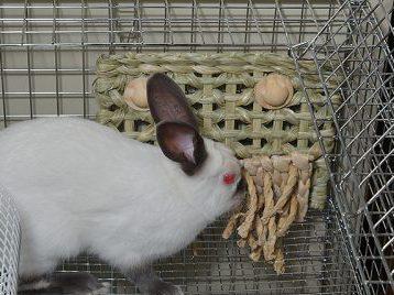 ウサギのケージのフェンス