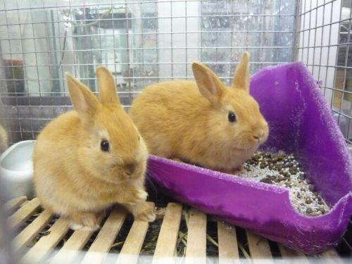 ウサギのトイレ