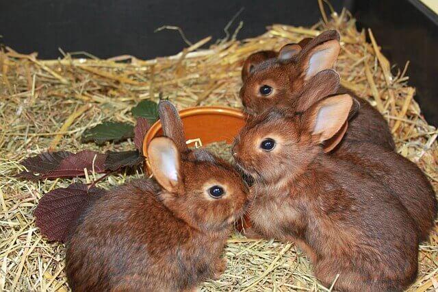 ウサギ群れ