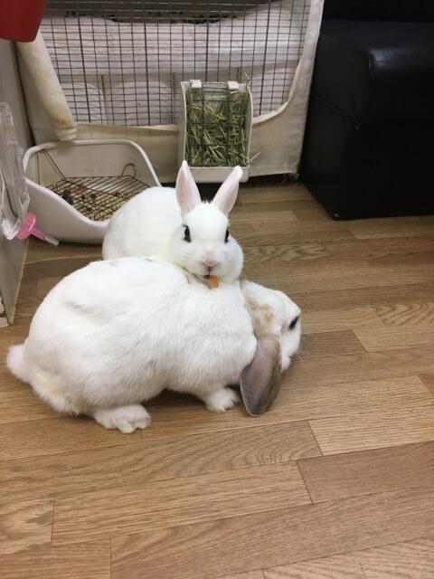 ウサギのマット