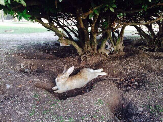 ウサギの巣穴
