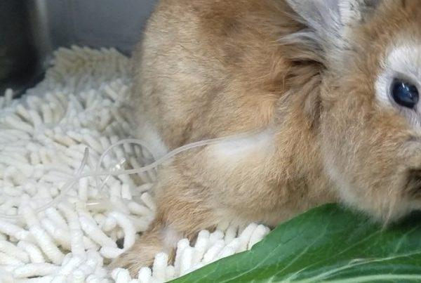 ウサギマット