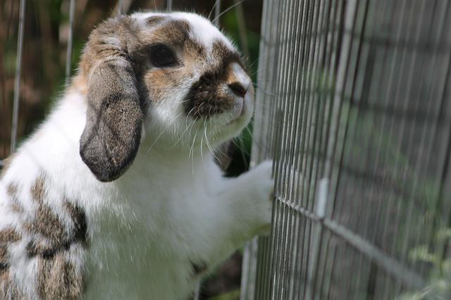 ウサギのサークル