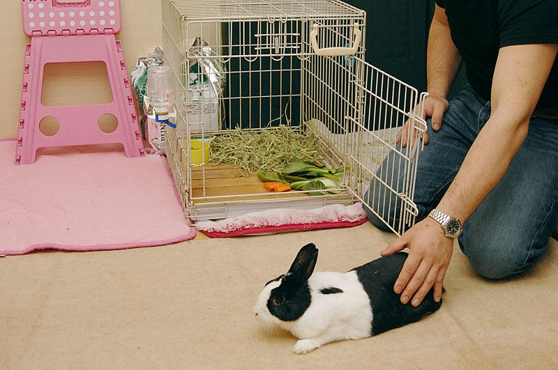 ウサギ部屋の放し飼い