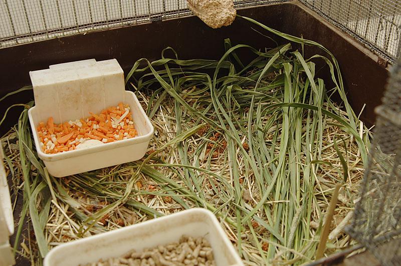 ウサギ牧草床敷