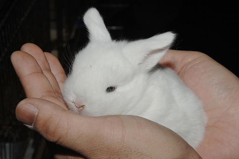 ウサギ幼体