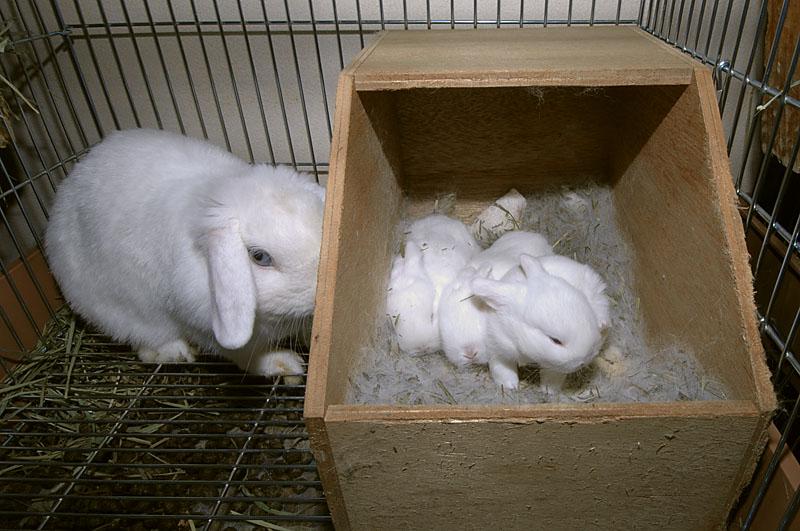 ウサギ母子