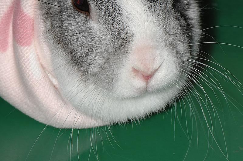 ウサギのヒゲ