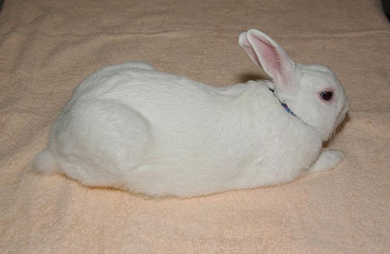 リラックスなウサギ