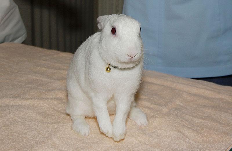威嚇したウサギ